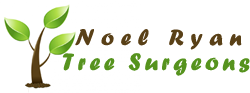 Noel Ryan Tree Surgeon
